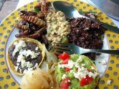 5 insectos comestibles que deberías probar