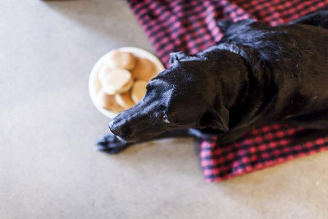 Perro Duke fotografias de Robyn Arouty (1)
