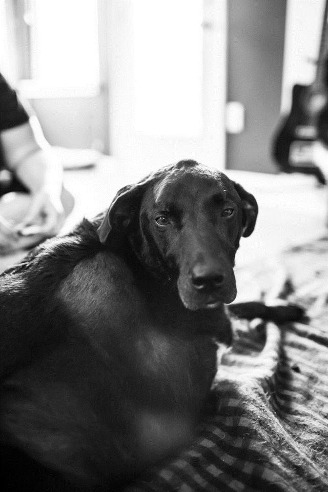 Perro Duke fotografias de Robyn Arouty (23)
