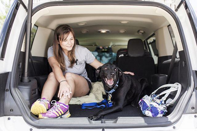 Perro Duke fotografias de Robyn Arouty (20)
