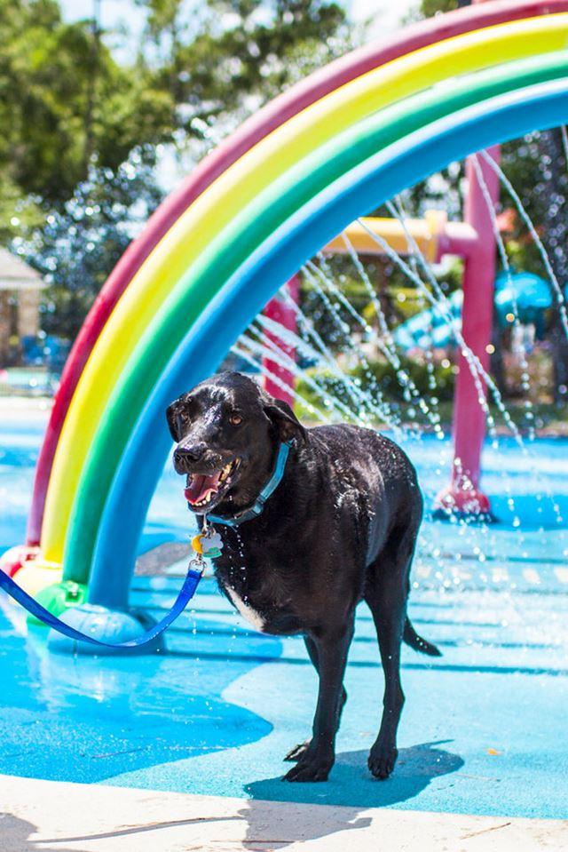 Perro Duke fotografias de Robyn Arouty (14)