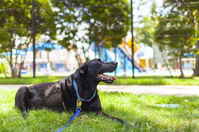 Perro Duke fotografias de Robyn Arouty (11)
