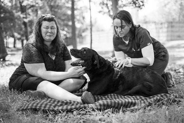 Perro Duke fotografias de Robyn Arouty (9)