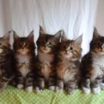 El video de los gatos sincronizados que te hará el día