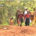 Una perra adopta a dos niños que fueron abandonados por una madre alcohólica