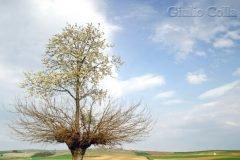 árbol doble de Casorzo (7)