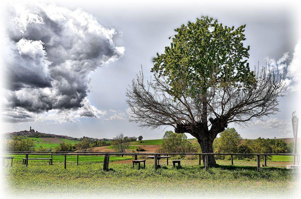 árbol doble de Casorzo (5)