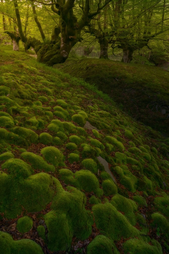 Parque Natural del Gorbea bosque mistico (1)