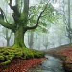 Parque Natural del Gorbea, un bosque místico en el País Vasco