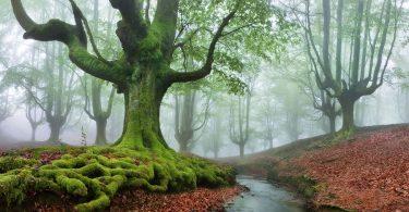 Parque Natural del Gorbea bosque mistico (8)