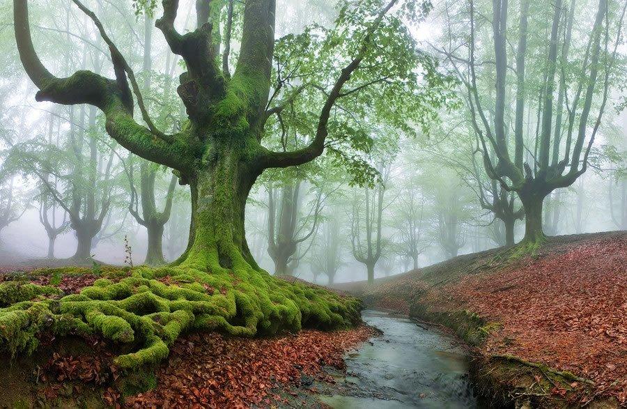 Parque Natural Gorbea floresta mística (8)