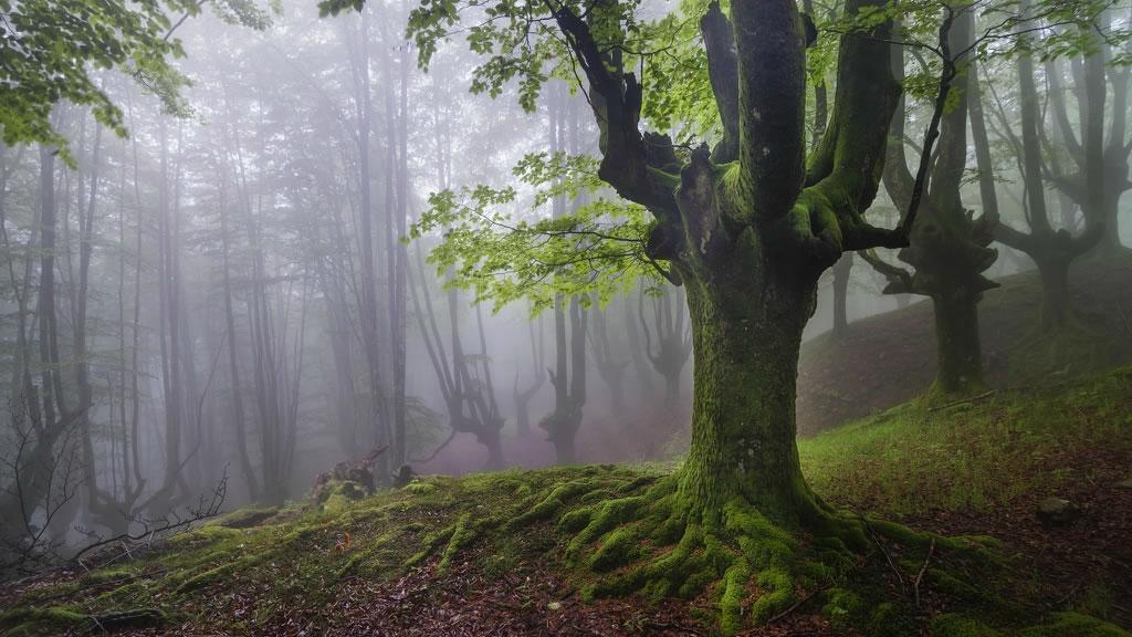Parque Natural del Gorbea bosque mistico (7)