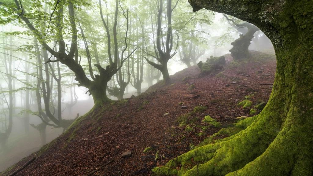 Parque Natural del Gorbea bosque mistico (6)