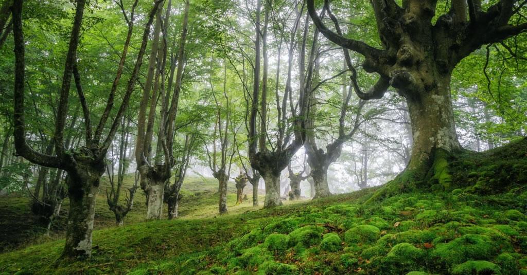 Parque Natural del Gorbea bosque mistico (5)