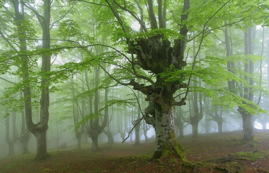 Parque Natural del Gorbea bosque mistico (4)