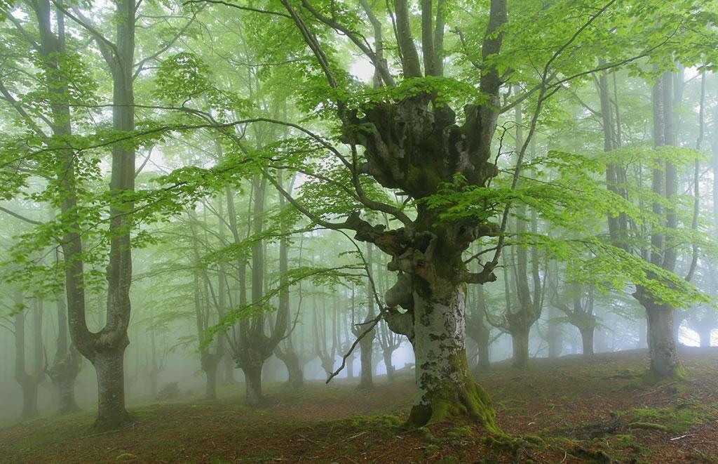 Parque Natural Gorbea floresta mística (4)