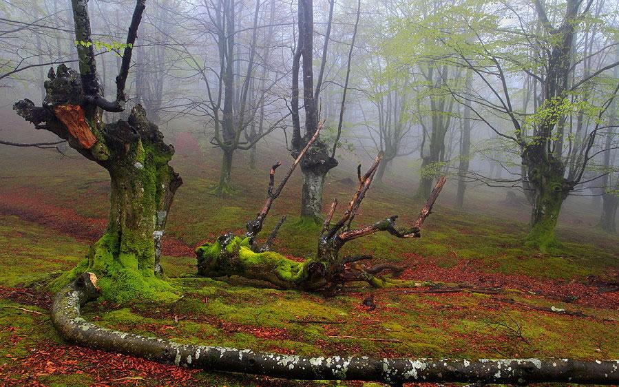 Parque Natural del Gorbea bosque mistico (3)