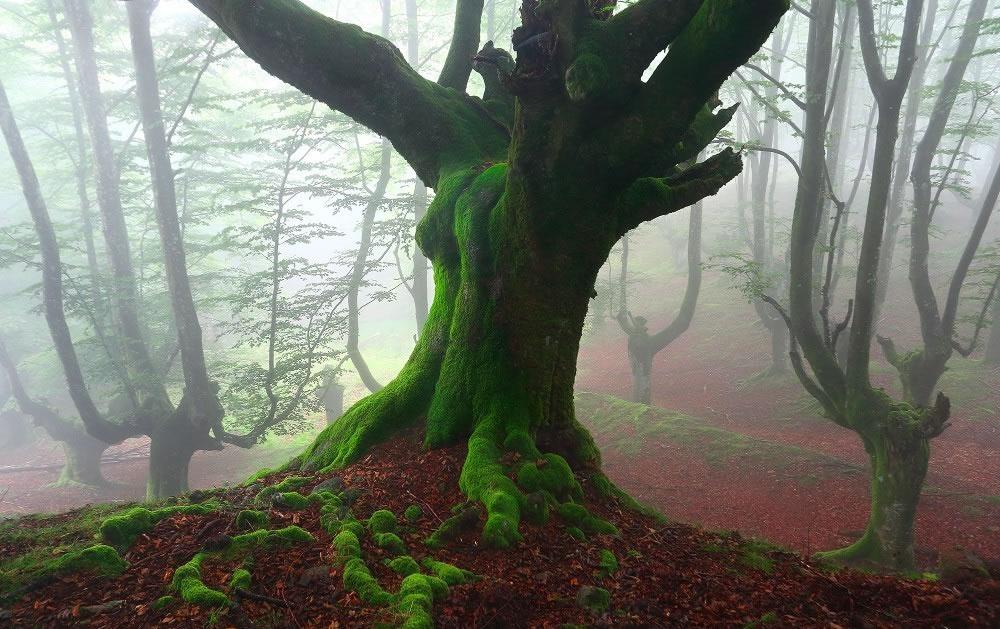 Parque Natural del Gorbea bosque mistico (2)