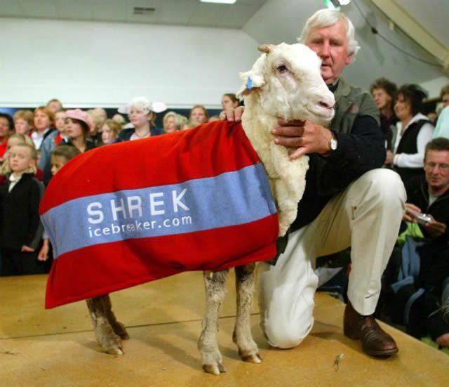Shrek, la oveja (3)
