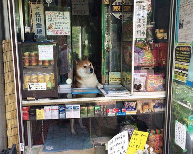 perro atiende tiden tabaco japón (1)