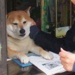Un perro atiende clientes en una tienda de tabaco