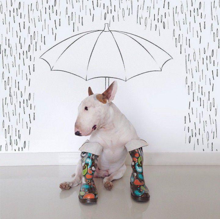 Bull-terrier-lluvia-720x718