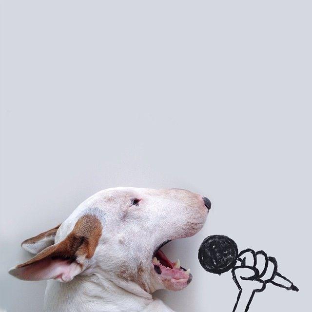Jimmy-Choo-cantante