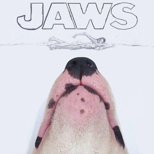 Jimmy-Choo-tiburon