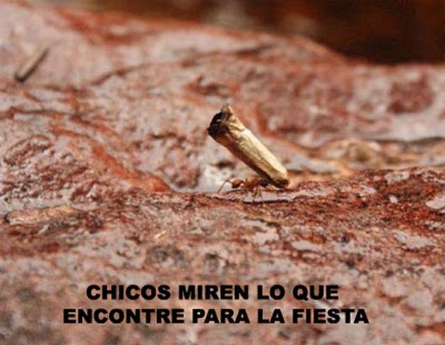 Marcianadas_145_1209141250 (77)
