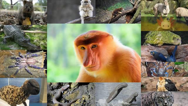 16 animales raros, probablemente extintos