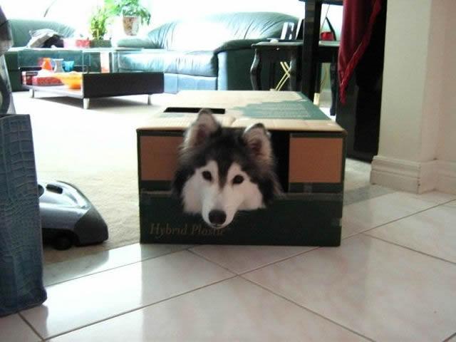 perros_crisis_identidad (13)