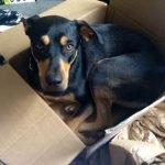 30 perros con síndrome de identidad gatuna