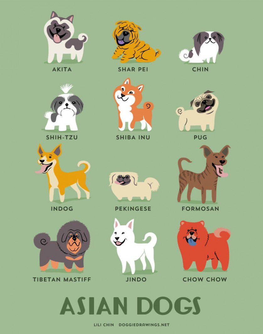 Razas de perros Asia