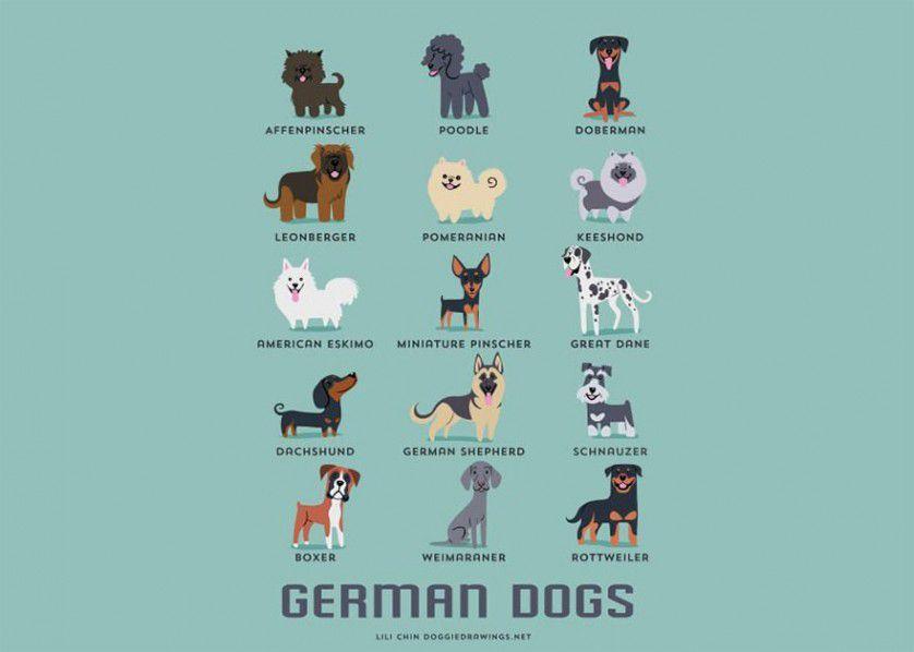 Razas de perros alemania