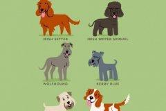 Razas de perros Irlanda