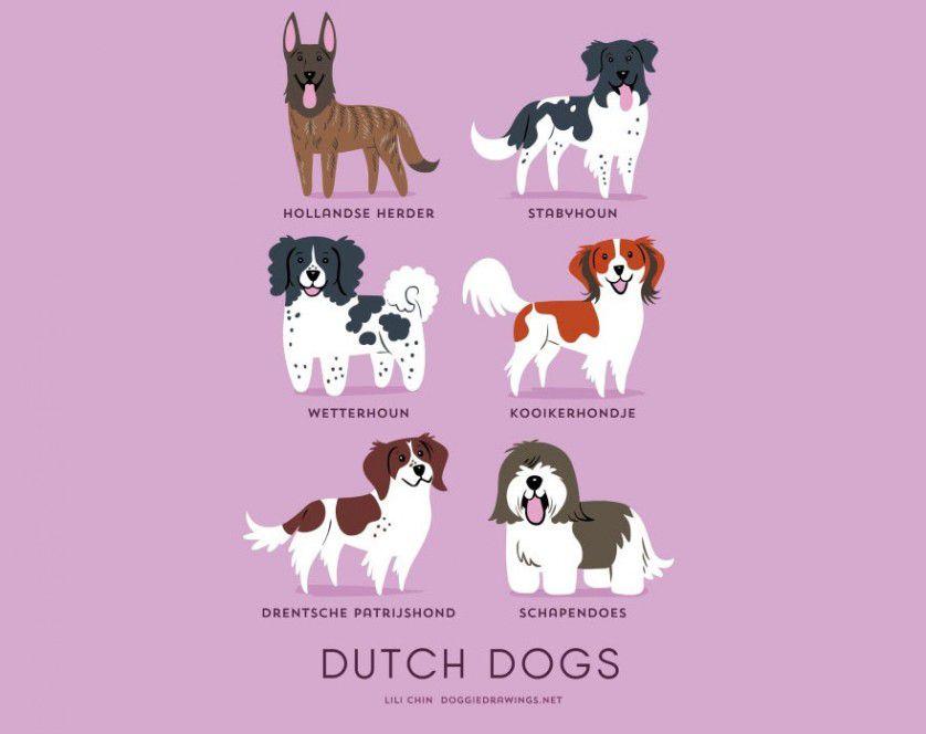 Razas de perros Países Bajos