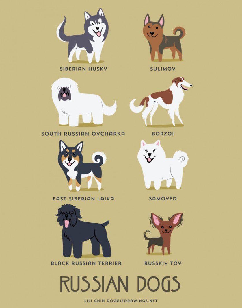 Razas de perros Rusia