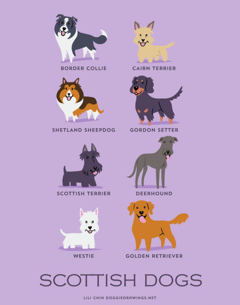 Razas de perros Escocia