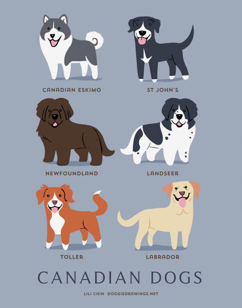 Razas de perros Canadá