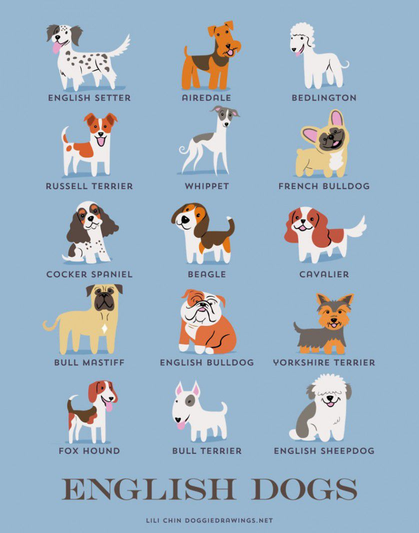 Razas de perros gran bretaña