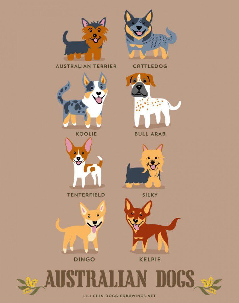 Razas de perros australia