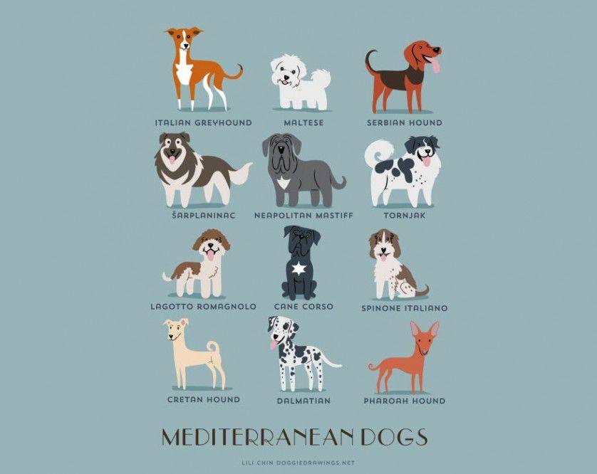 Razas de perros mediterraneo