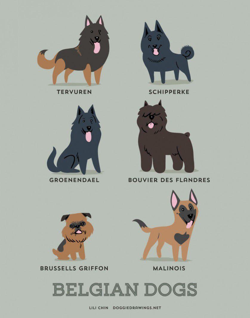 Razas de perros belgica
