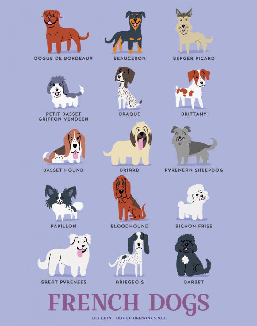 Razas de perros Francia