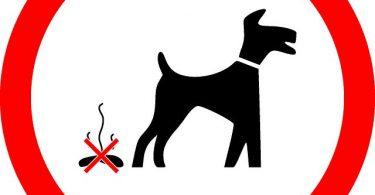 no excremento perro