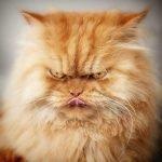 Garfi, el gato más furioso del mundo