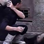 Cachorros de oso panda atacan a cuidador para no tomar medicamento + VIDEOS