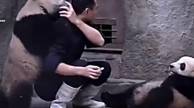 ataque_pandas