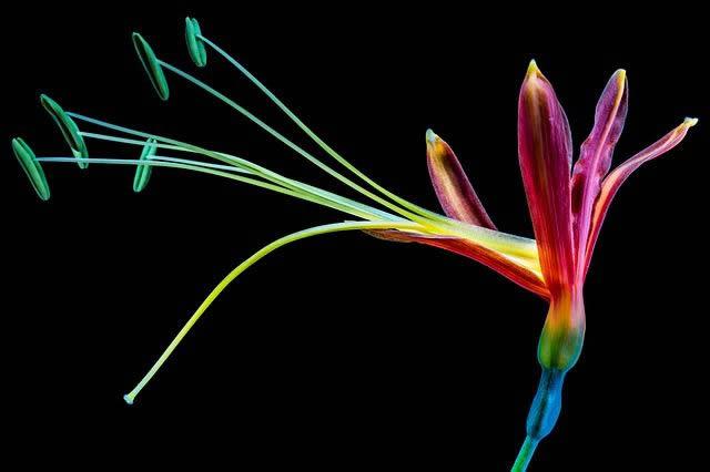 flor_colores