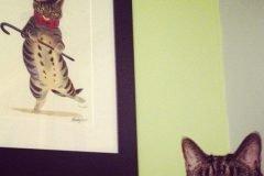 Gatos, esos malditos animales antipáticos